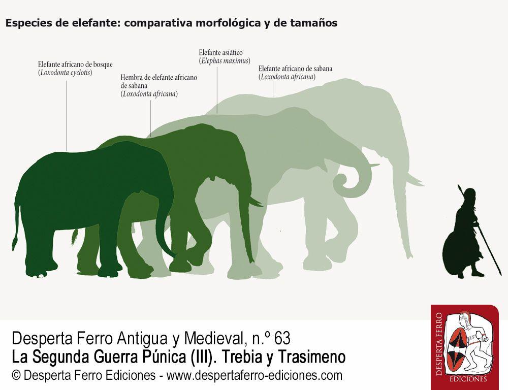 Los elefantes africanos de Aníbal por Michael B. Charles (Southern Cross University)